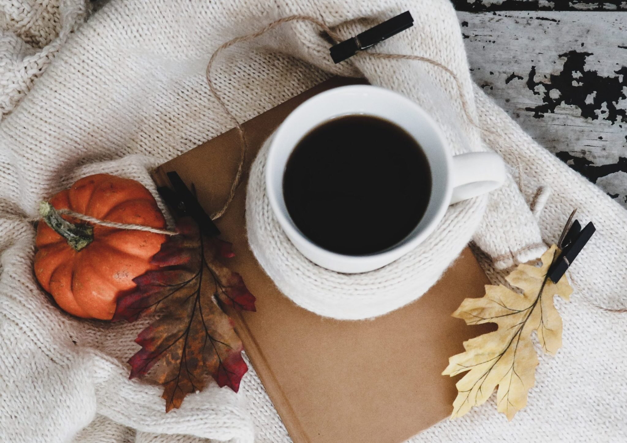 IQCS Autumn Newsletter 2021